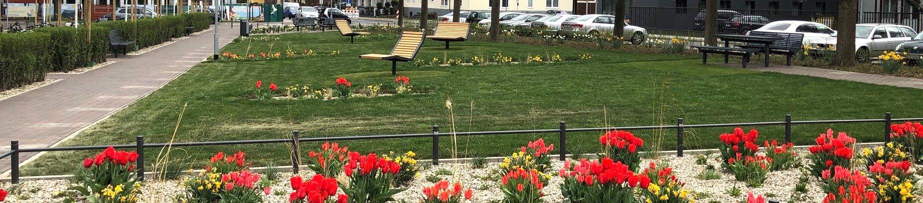 Hinter einem Pflanzbeet mit roten Tulpen und gelben Narzissen ist eine Rasenfläche. Auf dieser befinden sich drei Sitzelemente aus hellem Holz sowie weitere Pflanzbeete mit Tulpen und Narzissen. Umrahmt wird der Platz von einem Weg links, Parkplätzen hint